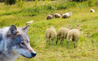 Coronavirus is the new wolf